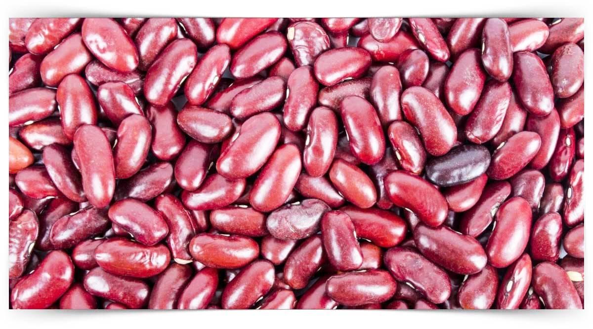 Yemeklik Dane Baklagil Yetiştiriciliği Kursu MEB Onaylı
