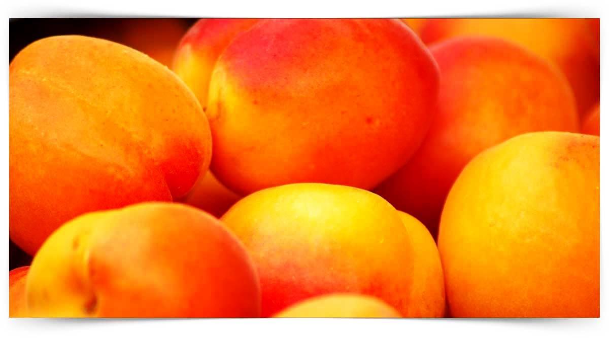 Yumuşak Çekirdekli Meyve Yetiştiriciliği Kursu MEB Onaylı